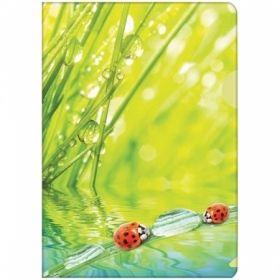 "Папка-уголок А4 Berlingo ""Ladybird"" 180 мкм"